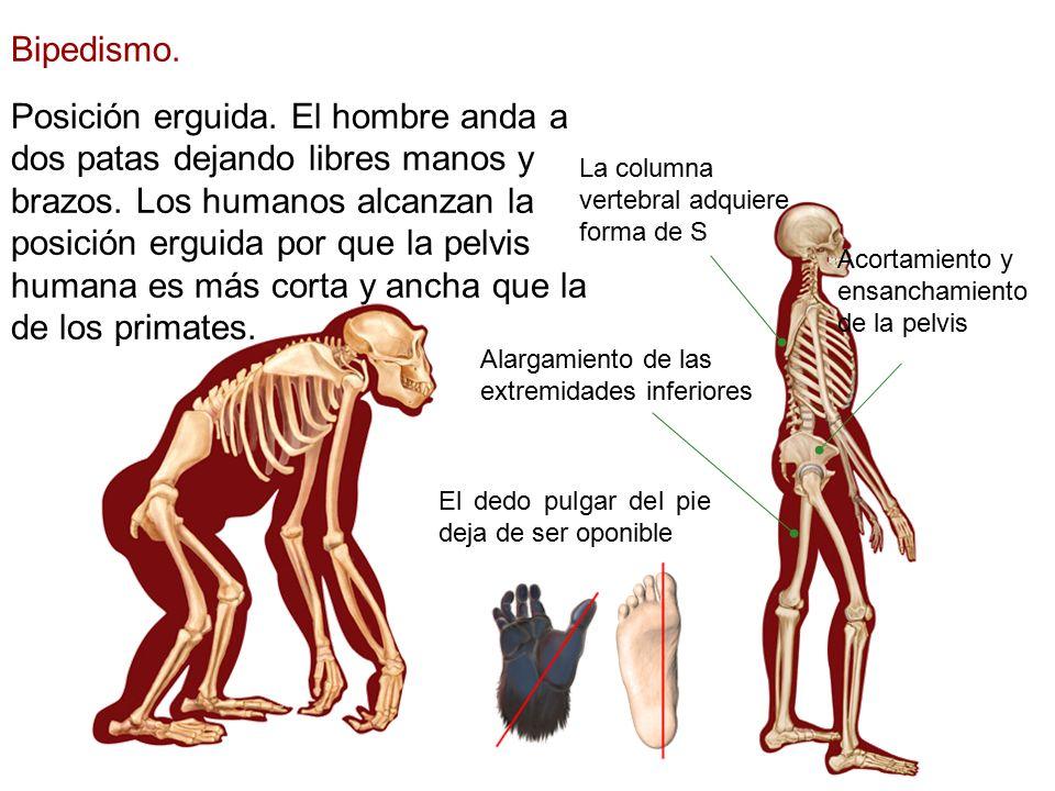 Asombroso Imágenes De La Columna Humanos Componente - Anatomía de ...