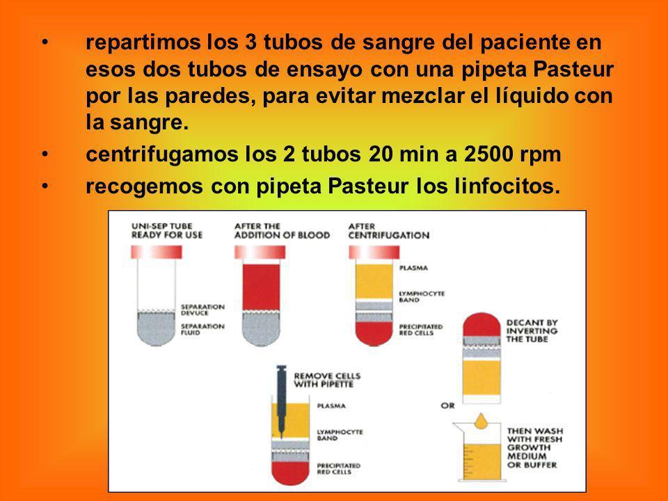 repartimos los 3 tubos de sangre del paciente en esos dos tubos de ensayo con una pipeta Pasteur por las paredes, para evitar mezclar el líquido con la sangre.