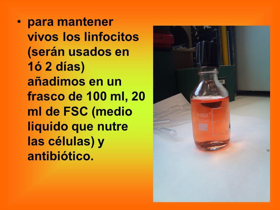 para mantener vivos los linfocitos (serán usados en 1ó 2 días) añadimos en un frasco de 100 ml, 20 ml de FSC (medio liquido que nutre las células) y antibiótico.
