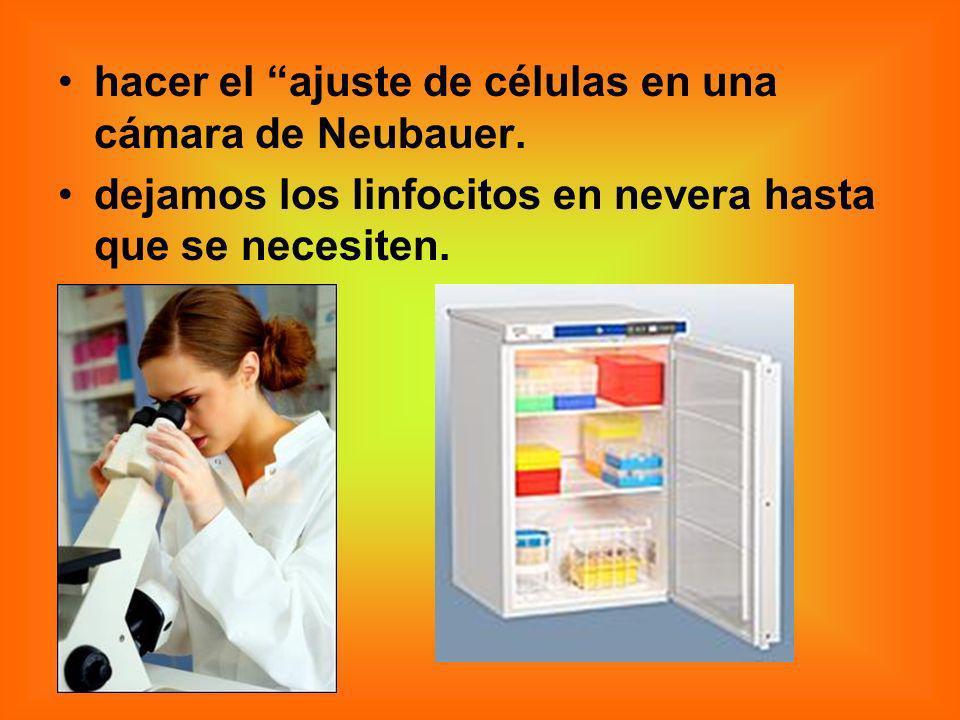 hacer el ajuste de células en una cámara de Neubauer.