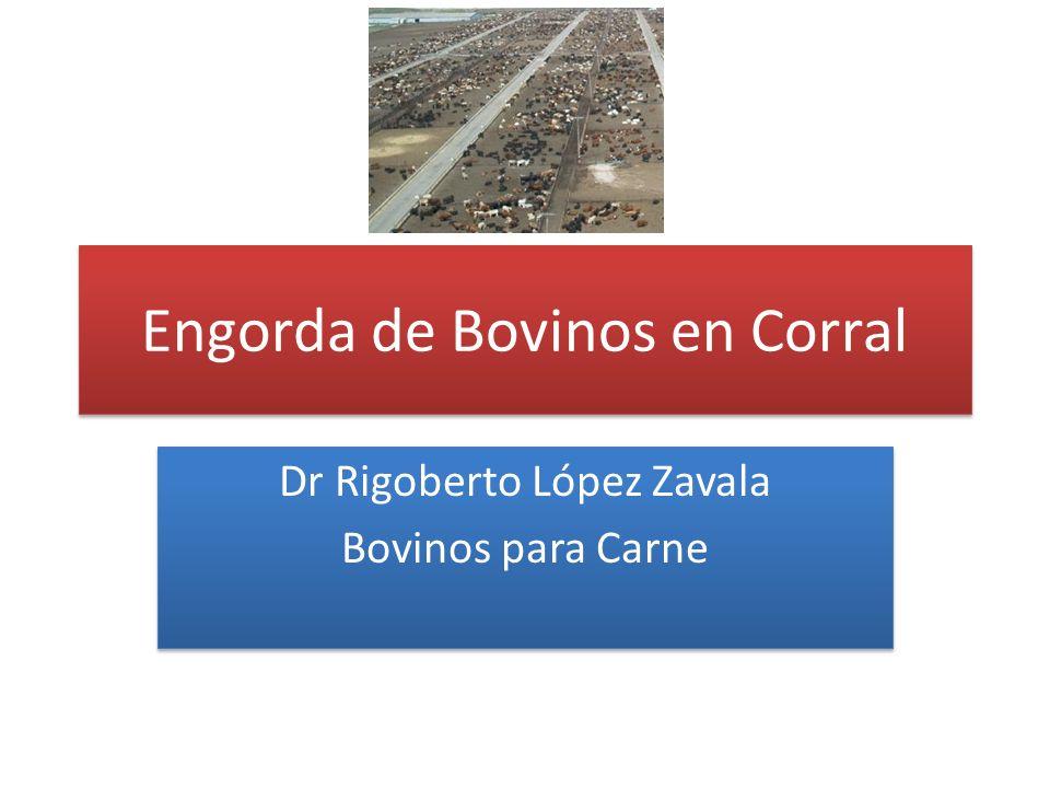 Engorda de Bovinos en Corral