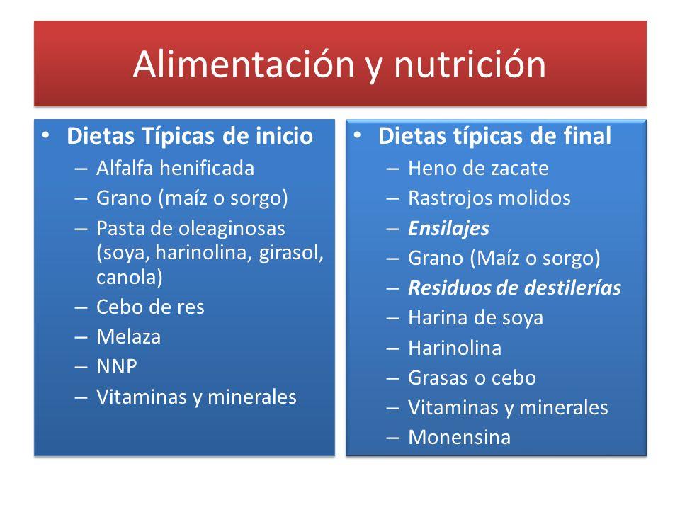 Alimentación y nutrición