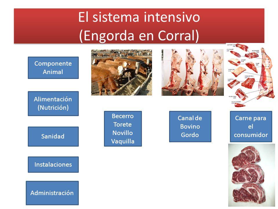 El sistema intensivo (Engorda en Corral)