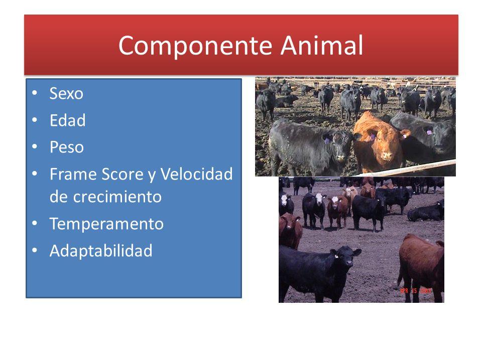 Componente Animal Sexo Edad Peso