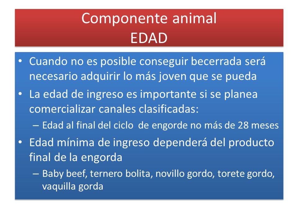 Componente animal EDAD