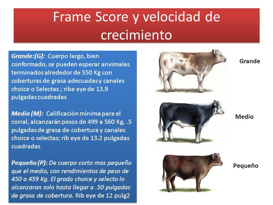Frame Score y velocidad de crecimiento