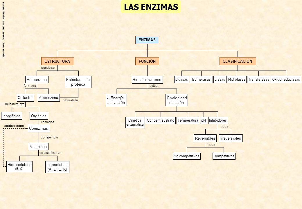 LAS ENZIMAS ENZIMAS CLASIFICACIÓN FUNCIÓN Biocatalizadores  Energía