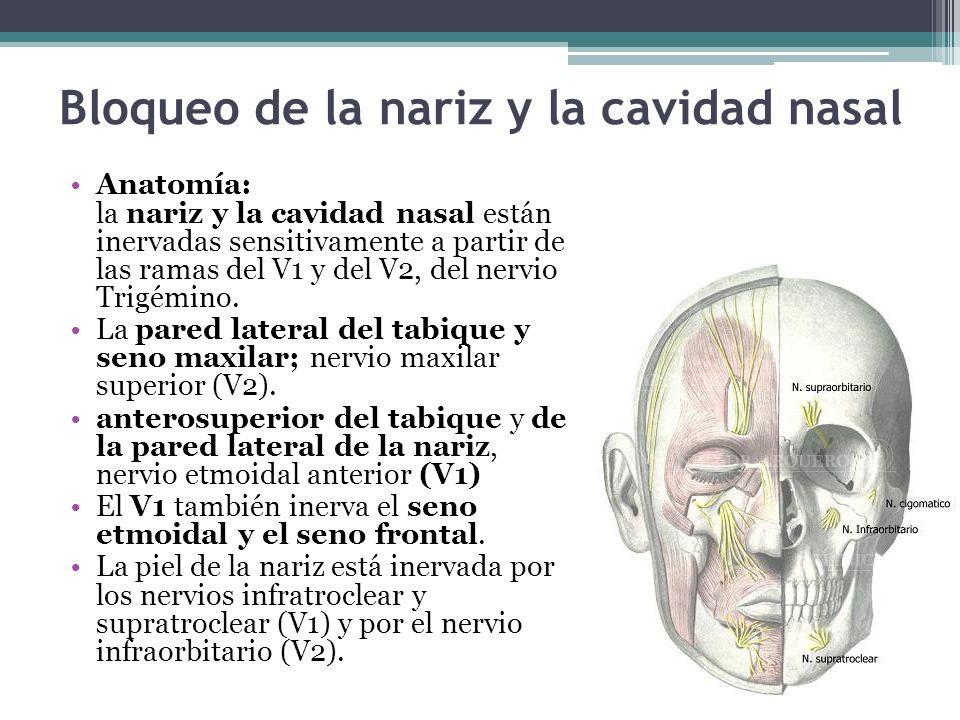 Bloqueo de la nariz y la cavidad nasal