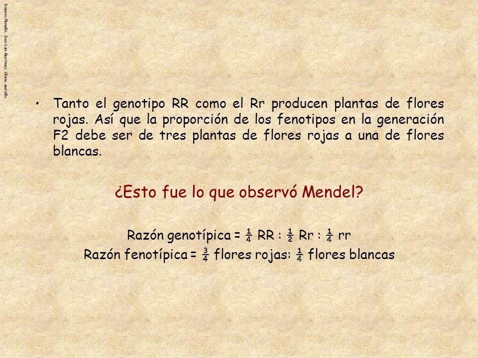 ¿Esto fue lo que observó Mendel
