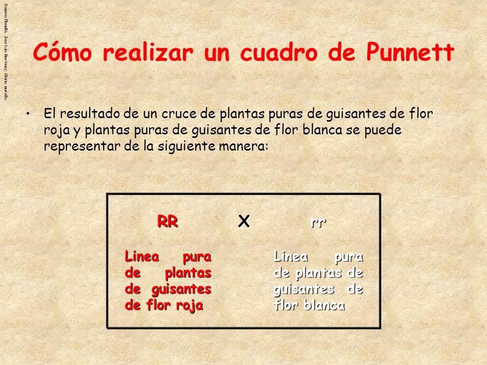 Cómo realizar un cuadro de Punnett