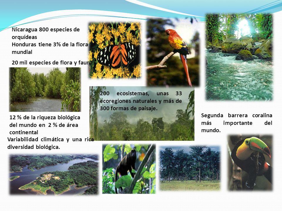 Nicaragua 800 especies de orquídeas