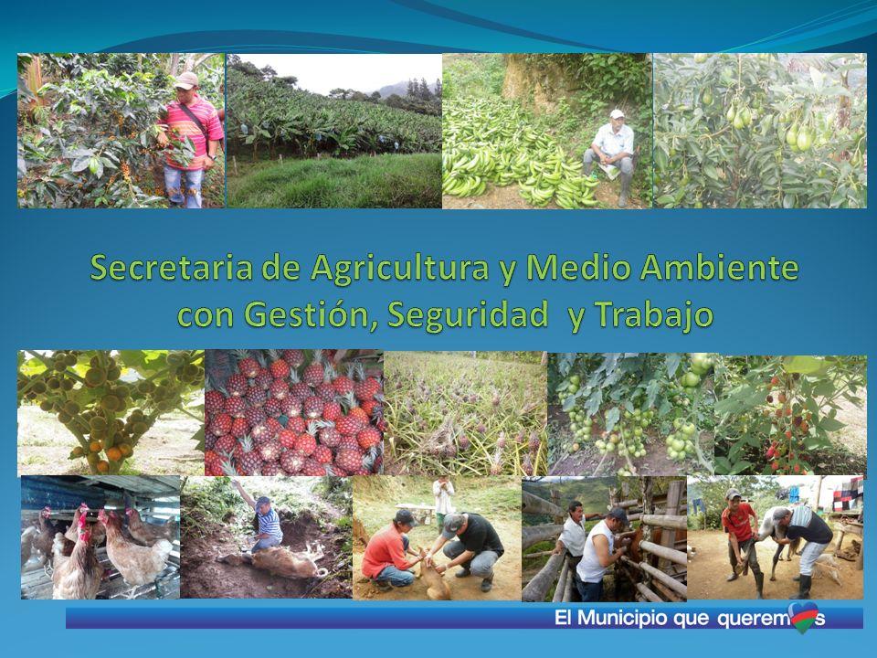 Secretaria de Agricultura y Medio Ambiente con Gestión, Seguridad y Trabajo