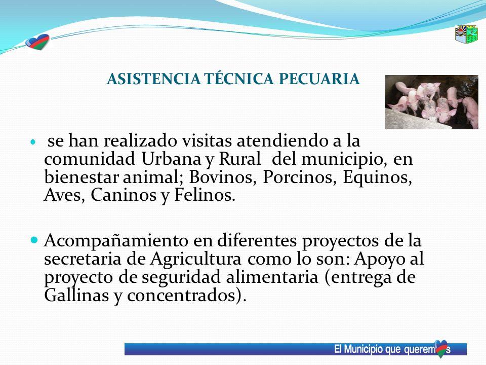 ASISTENCIA TÉCNICA PECUARIA