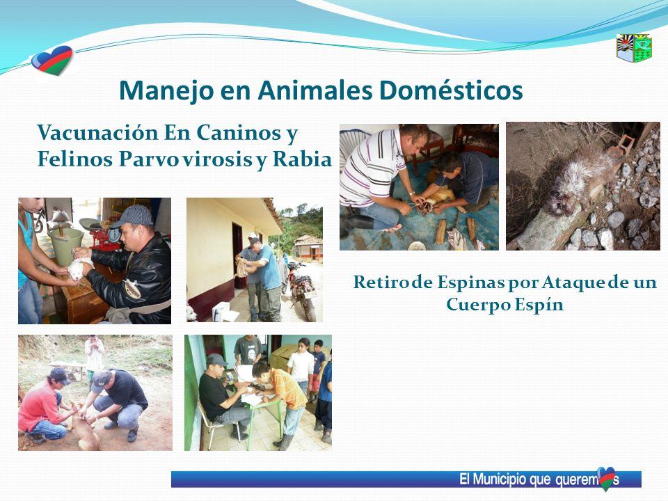 Manejo en Animales Domésticos