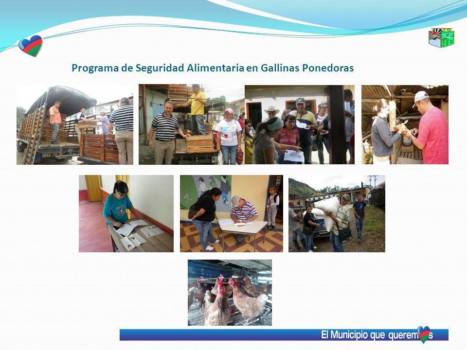 Programa de Seguridad Alimentaria en Gallinas Ponedoras