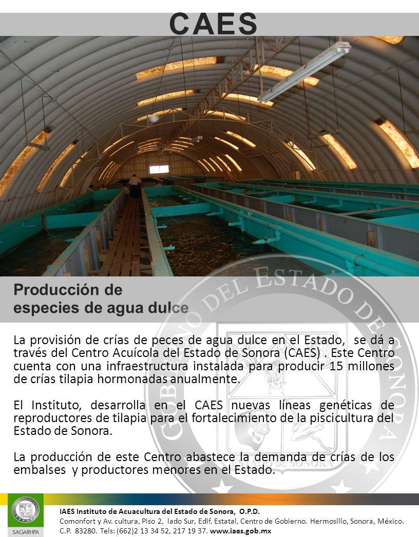 Producción de especies de agua dulce