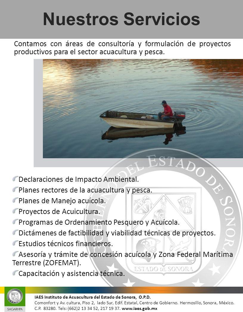 Nuestros Servicios Contamos con áreas de consultoría y formulación de proyectos productivos para el sector acuacultura y pesca.