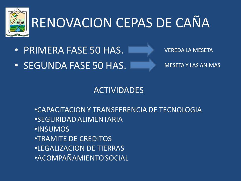 RENOVACION CEPAS DE CAÑA