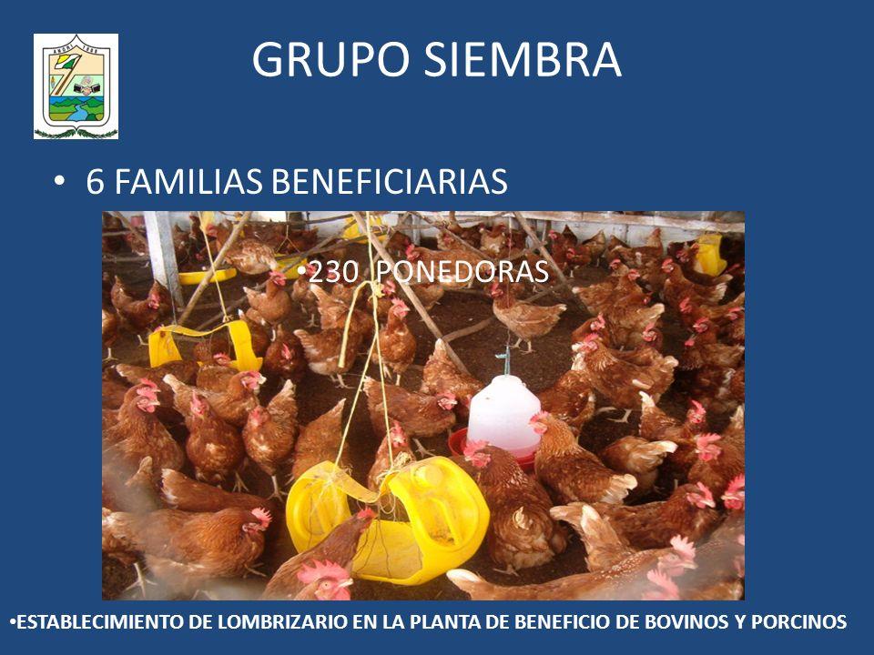 GRUPO SIEMBRA 6 FAMILIAS BENEFICIARIAS 230 PONEDORAS