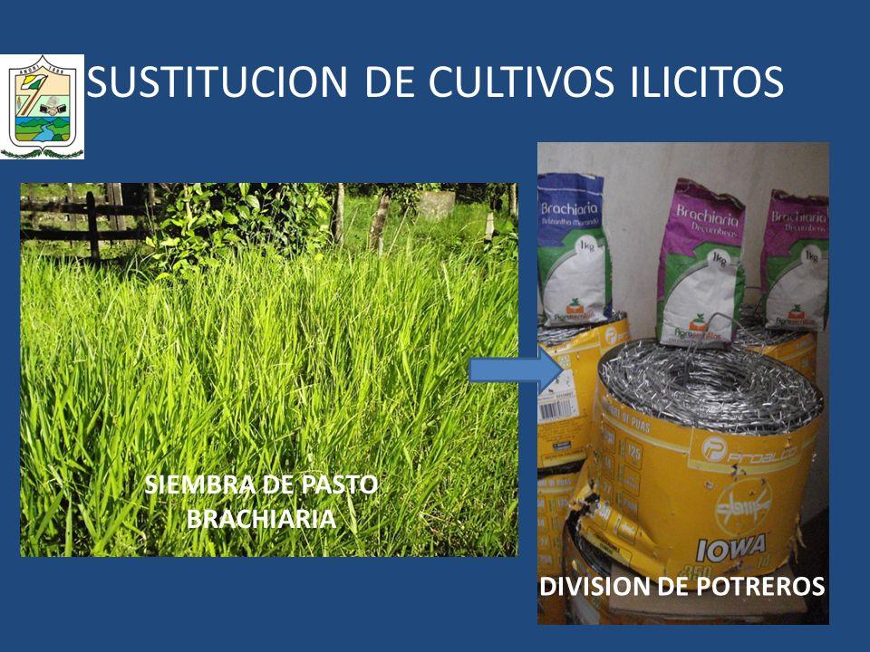 SUSTITUCION DE CULTIVOS ILICITOS