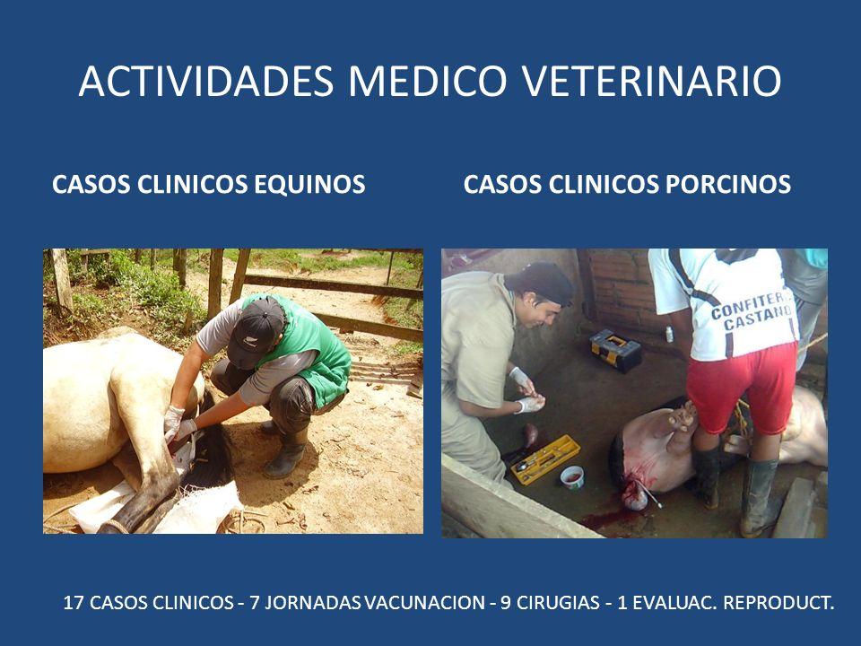ACTIVIDADES MEDICO VETERINARIO