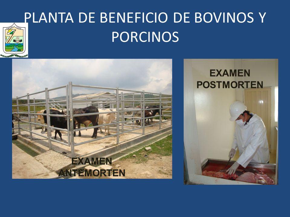PLANTA DE BENEFICIO DE BOVINOS Y PORCINOS