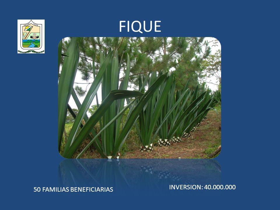 FIQUE INVERSION: 40.000.000 50 FAMILIAS BENEFICIARIAS