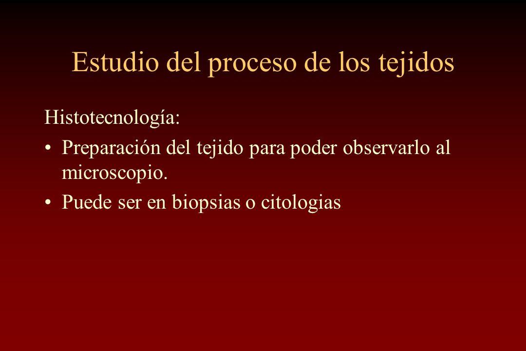 Estudio del proceso de los tejidos