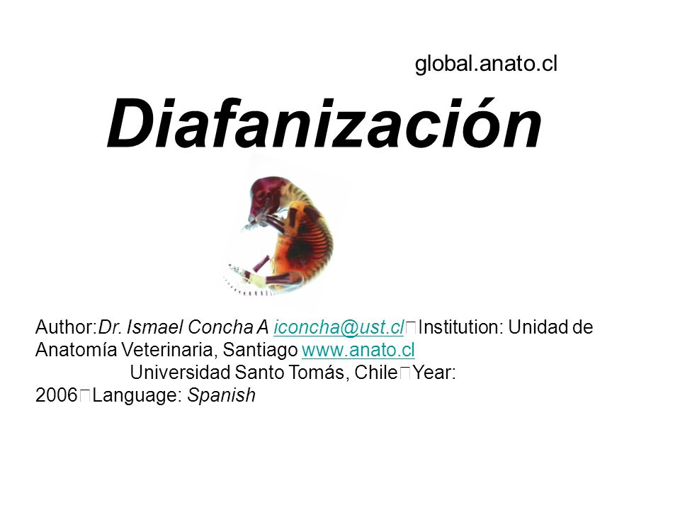 Diafanización global.anato.cl