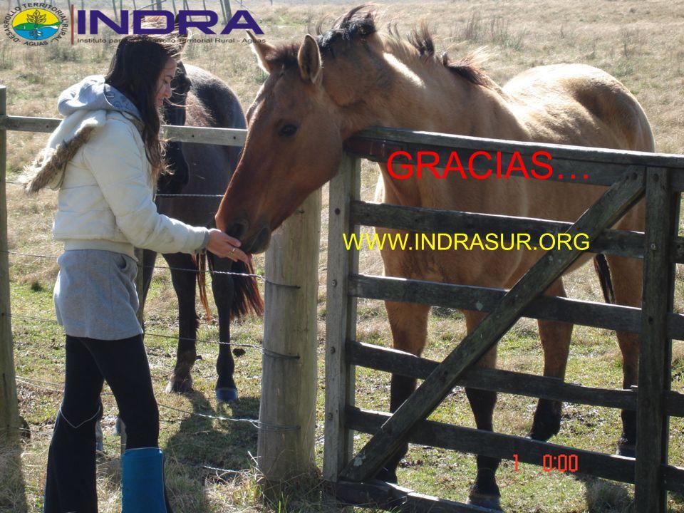 Gracias………… GRACIAS… WWW.INDRASUR.ORG