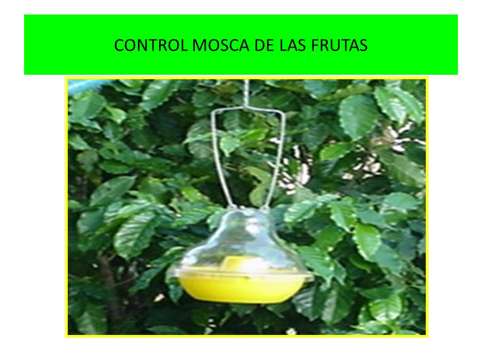 CONTROL MOSCA DE LAS FRUTAS