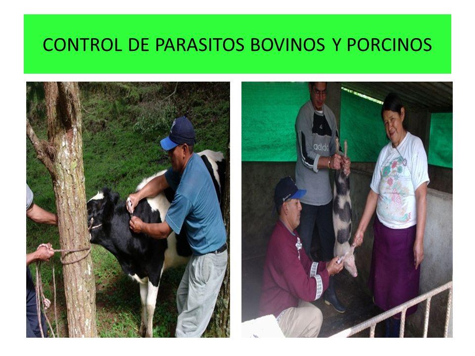 CONTROL DE PARASITOS BOVINOS Y PORCINOS