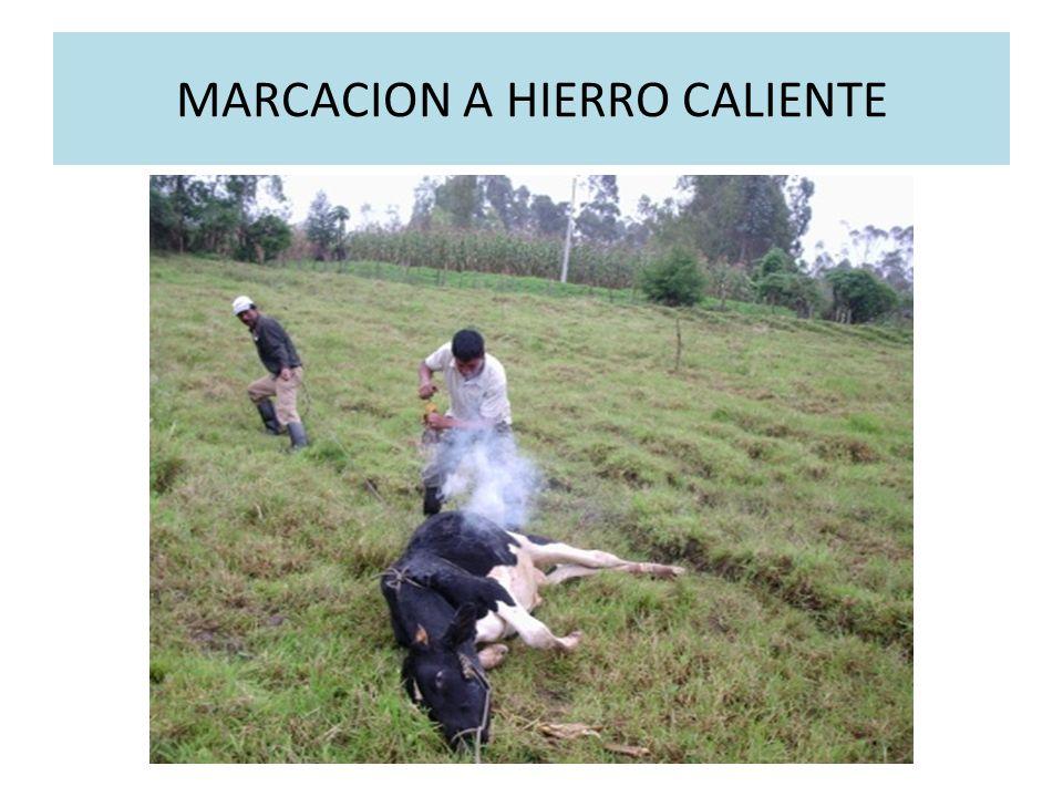 MARCACION A HIERRO CALIENTE