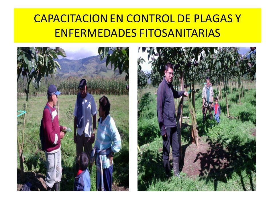 CAPACITACION EN CONTROL DE PLAGAS Y ENFERMEDADES FITOSANITARIAS