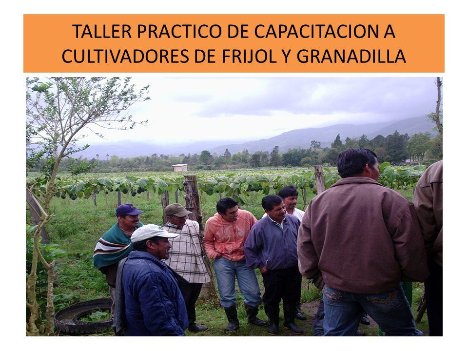 TALLER PRACTICO DE CAPACITACION A CULTIVADORES DE FRIJOL Y GRANADILLA