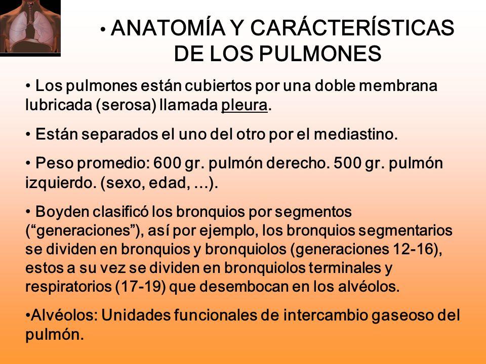 ANATOMÍA Y CARÁCTERÍSTICAS DE LOS PULMONES