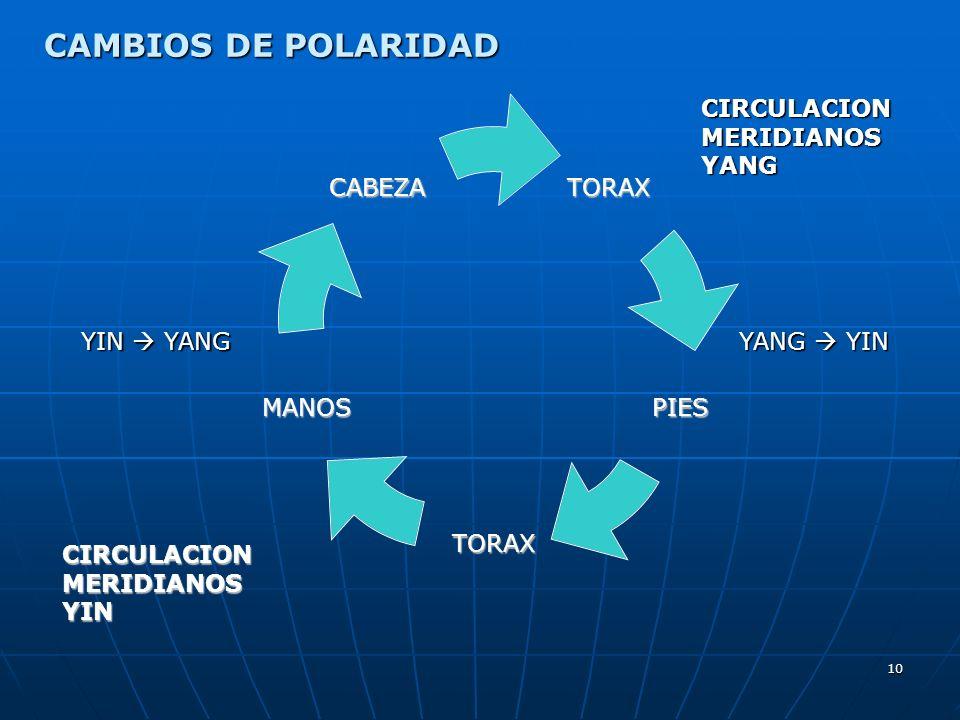 CAMBIOS DE POLARIDAD CIRCULACION MERIDIANOS YANG YIN  YANG YANG  YIN