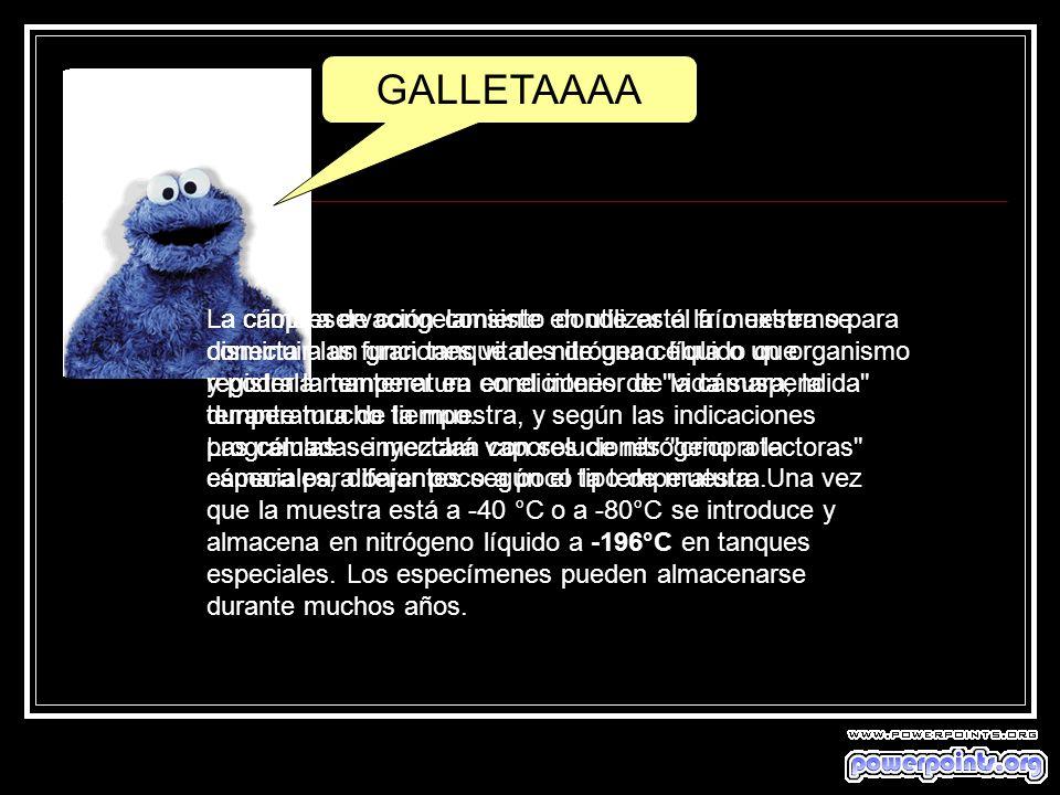 GALLETAAAA