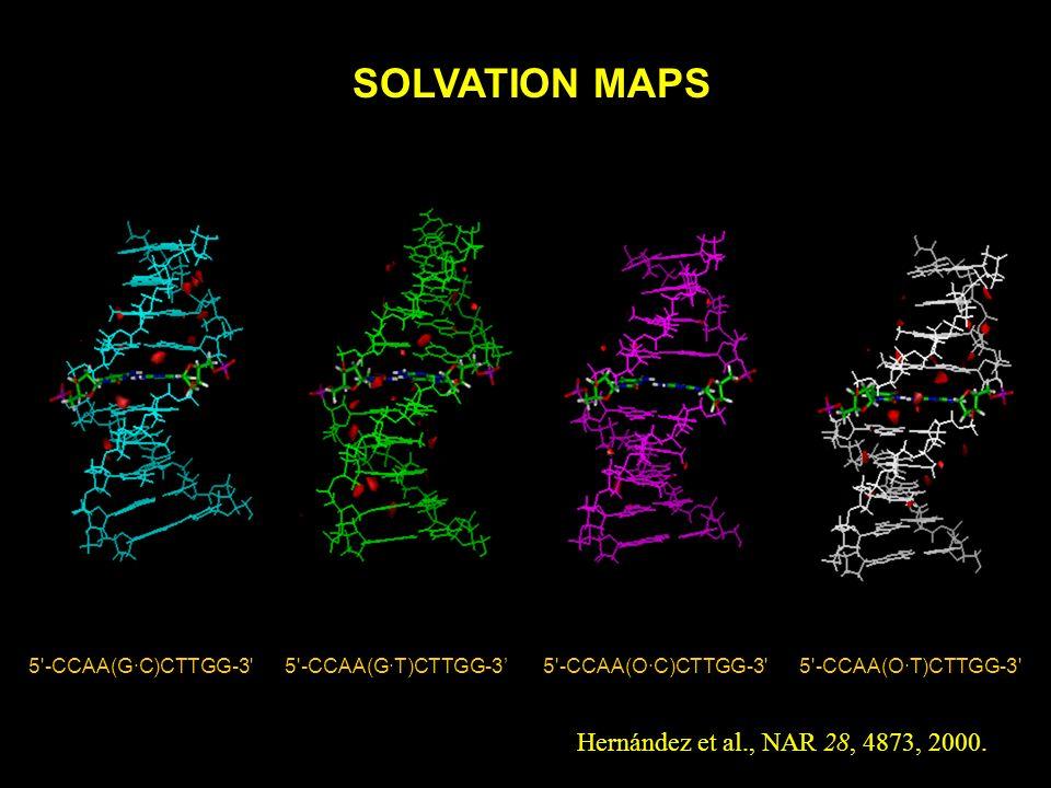 SOLVATION MAPS Hernández et al., NAR 28, 4873, 2000.
