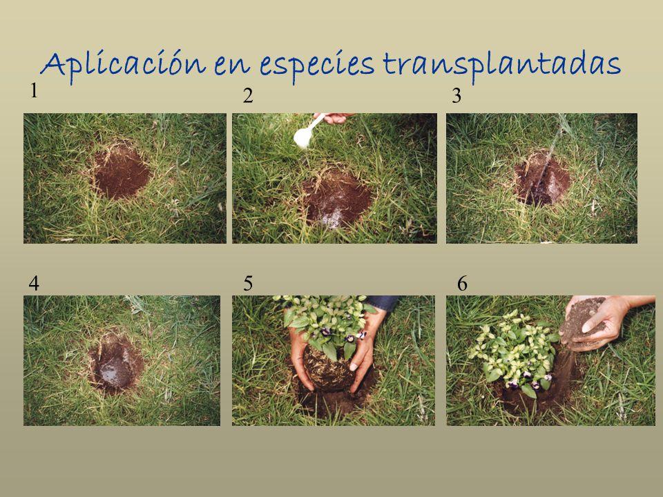 Aplicación en especies transplantadas