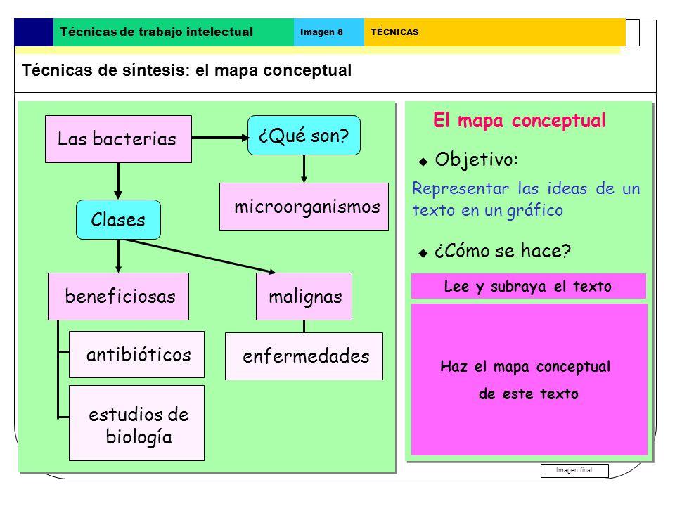 Las bacterias El mapa conceptual Las bacterias ¿Qué son