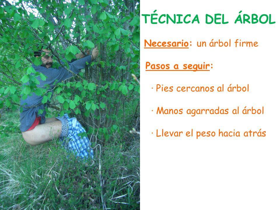 TÉCNICA DEL ÁRBOL Necesario: un árbol firme Pasos a seguir: