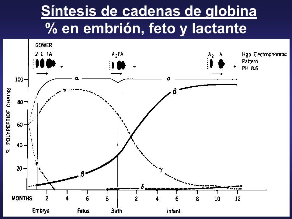 Síntesis de cadenas de globina