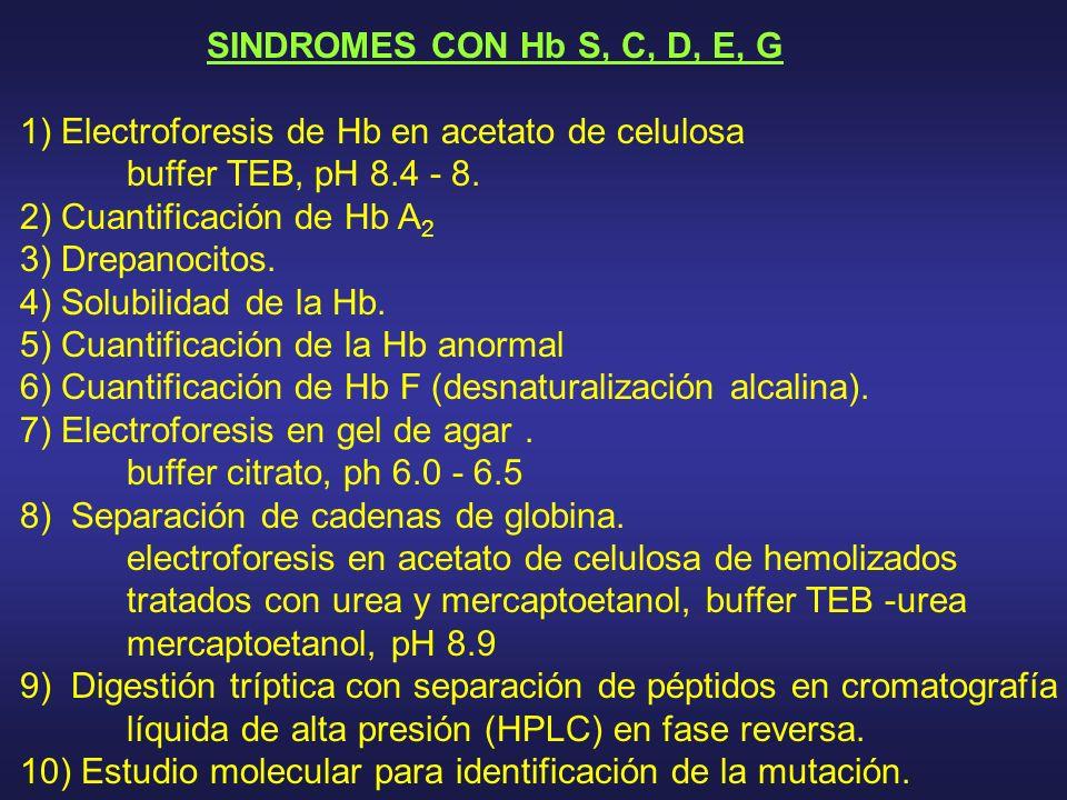 SINDROMES CON Hb S, C, D, E, G 1) Electroforesis de Hb en acetato de celulosa. buffer TEB, pH 8.4 - 8.