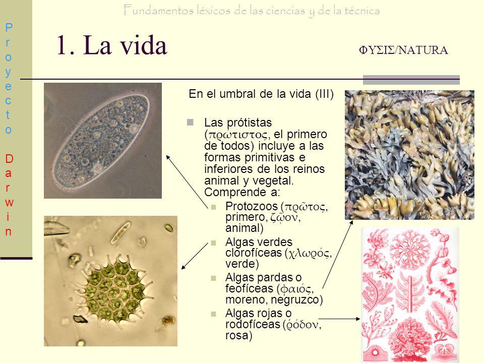 Fundamentos léxicos de las ciencias y de la técnica