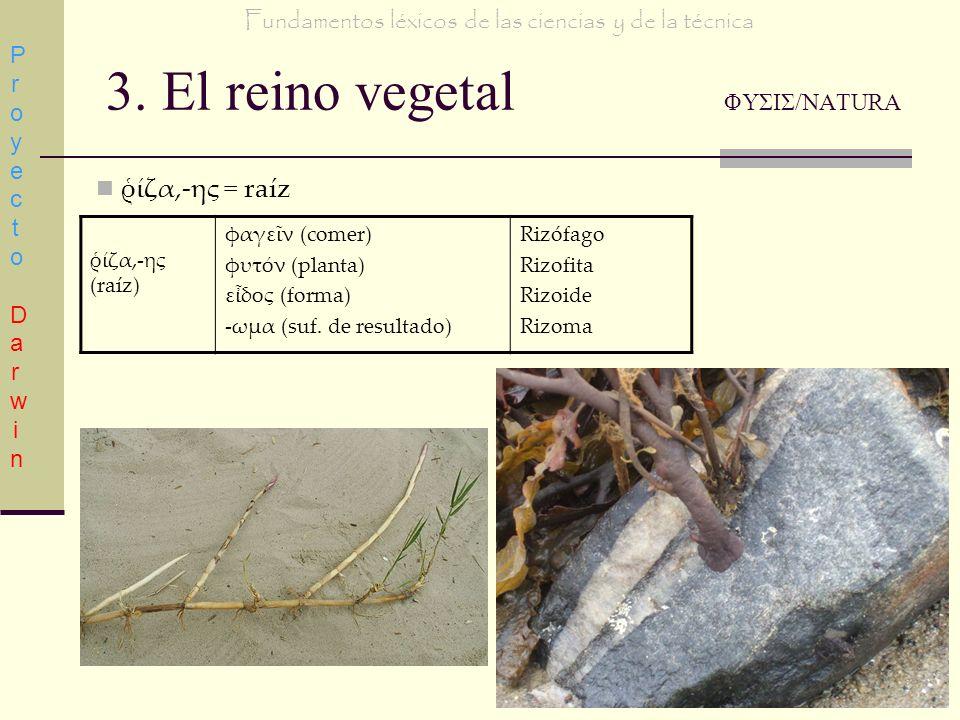 3. El reino vegetal ΦΥΣΙΣ/NATURA