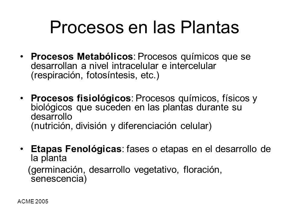 Procesos en las Plantas
