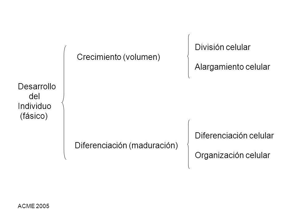 Crecimiento (volumen) Alargamiento celular Desarrollo del Individuo