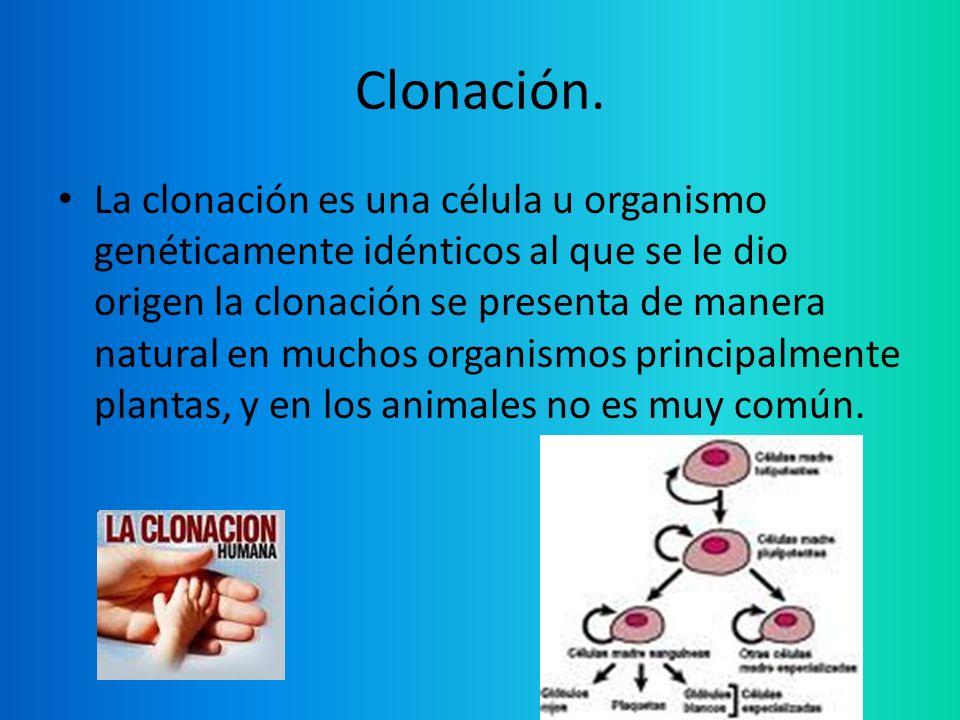 Clonación.
