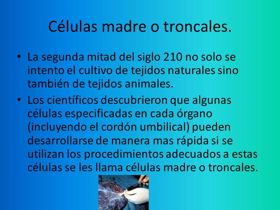 Células madre o troncales.